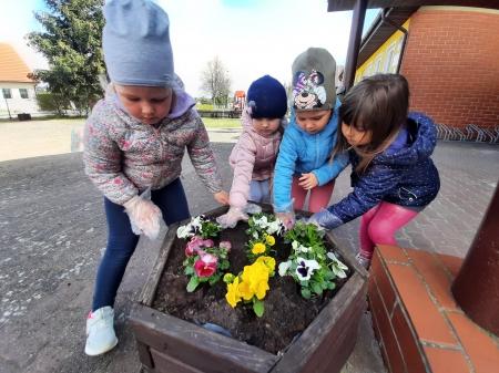 Przedszkolaki sadzą bratki z okazji Dnia Ziemi