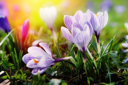 Szkolny Konkurs Fotograficzny ''Wiosna - ach to TY'' - rozstrzygnięty